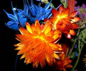 flori.jpg
