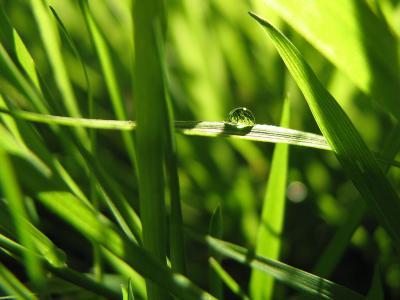 Roua in iarba